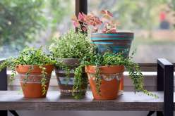 Painted Terracotta Pots: 3/15/18