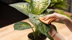 Plant Talk with The Tender Gardener: The Basics of Houseplant Care