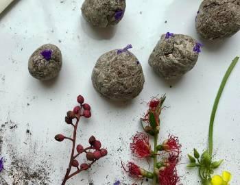 Seed Bombs: 2/21/17