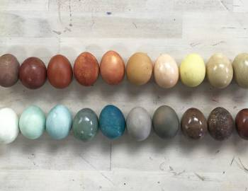 Naturally Dyed Easter Eggs: 3/27/18