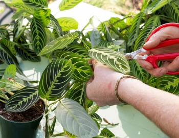 Plant Talk with the Tender Gardener: Repotting and Propagation of Houseplants