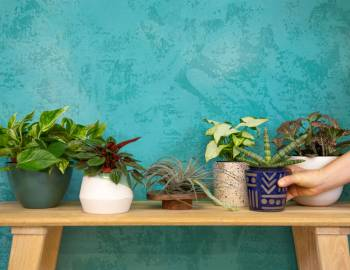 Plant Talk with The Tender Gardener: How to Choose a Houseplant